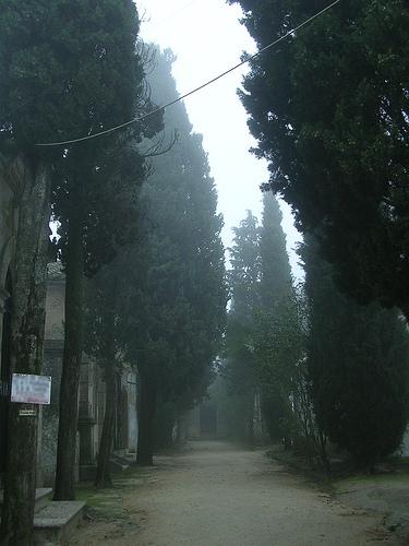 Niebla 039a