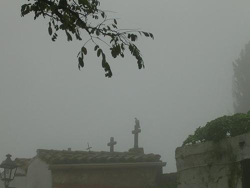 Niebla 024